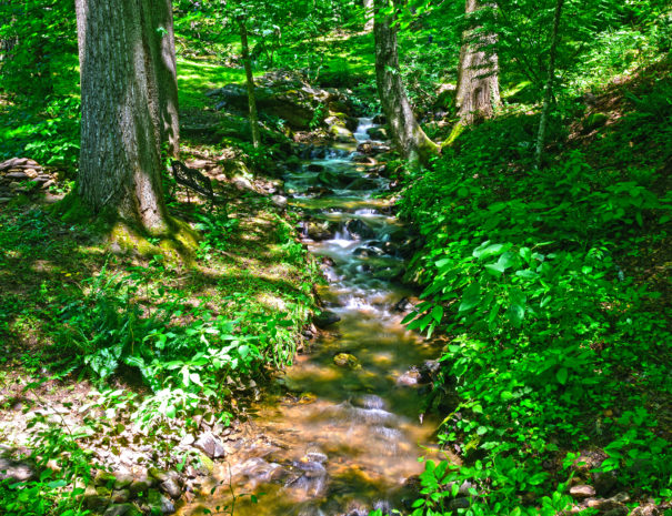 CC Creek